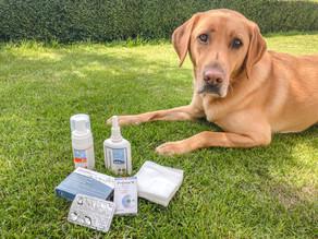 Hunde-Notfallapotheke: Was gehört rein? + wichtige Notfallnummer!!!!