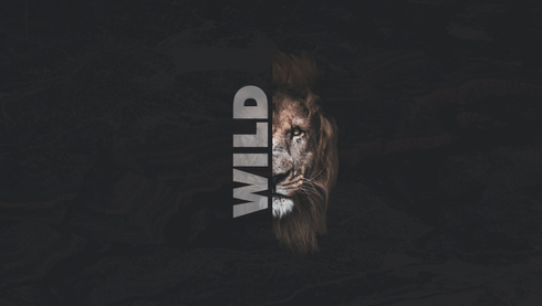 wild-01.png
