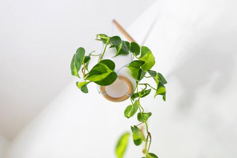 מתלה צמח תמיד משדרג את האווירה ומכניס קלילות ויופי