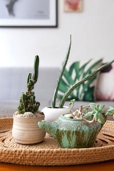 צמחים ועציצונים בשולחן הסלון