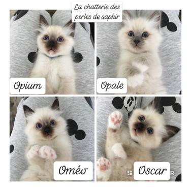 Oscar Opium Oméo Opale.JPG