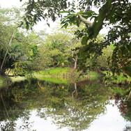 Pond1-lago-bay.jpg