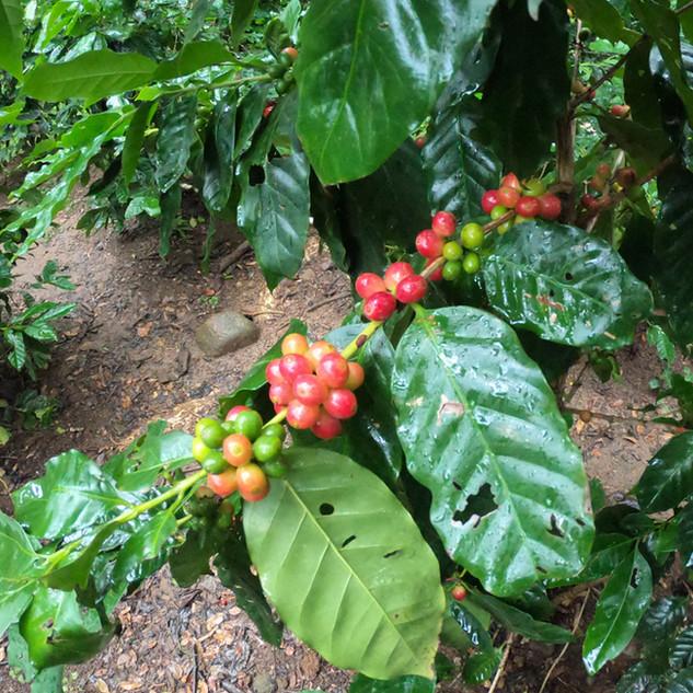 Coffee-LagoBay.jpg