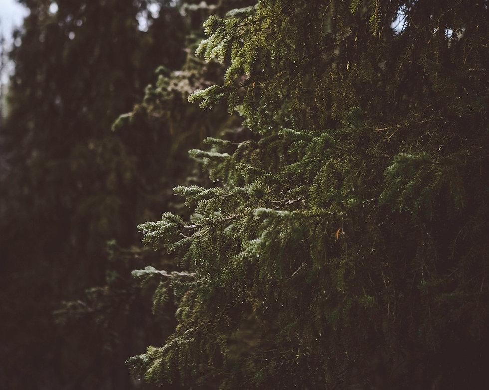 skog_edited.jpg