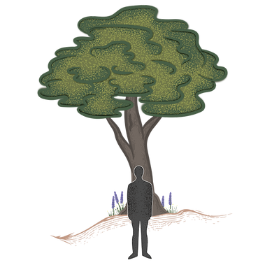 treefig-only-large.png
