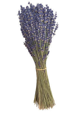 freshly harvested dried lavender bundle