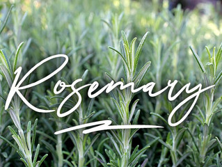 10 Ways to Use Rosemary from the Home Garden ~ By Ken Lain, the Mountain Gardener