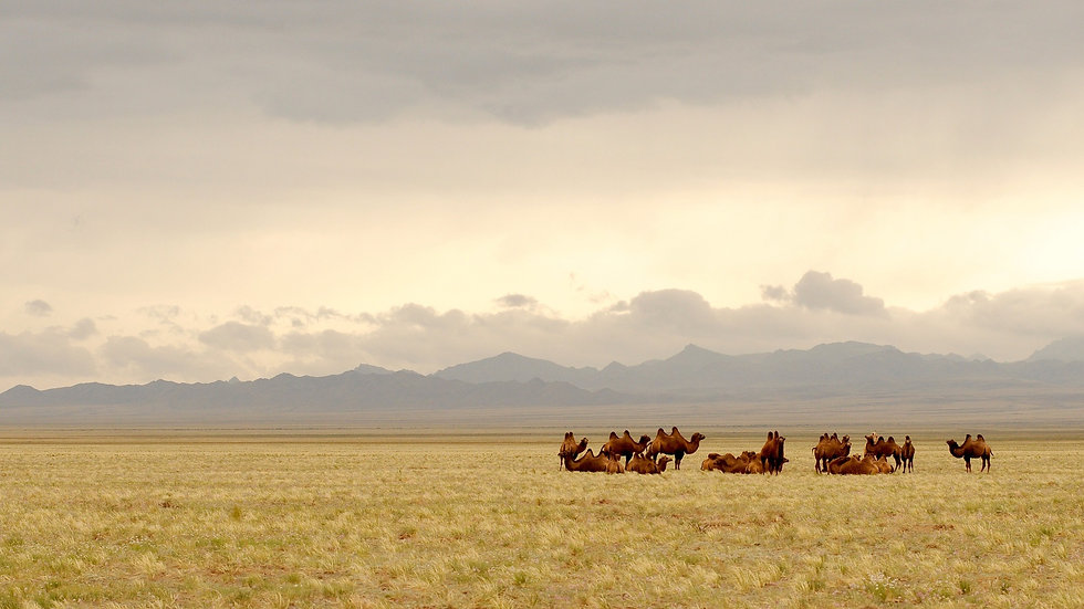 mongolia-695267_1920.jpg
