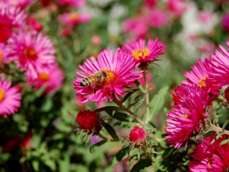 Bee-Friendly Gardens Perfect For Fall