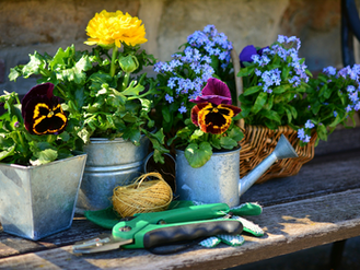 The Benefits of Gardening for Your Physical Health: Exercise, Risk Reduction, And Strength