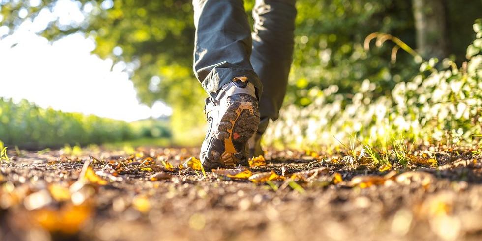 NIA Summer Trail Walk - Led by Local Naturalist Mark Ceneri