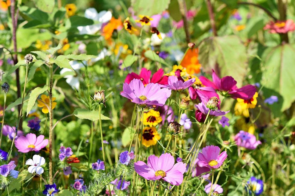 flower-meadow-3598549_1920.jpg