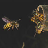 2-04 Wasp & spider - Phil Lester.jpg