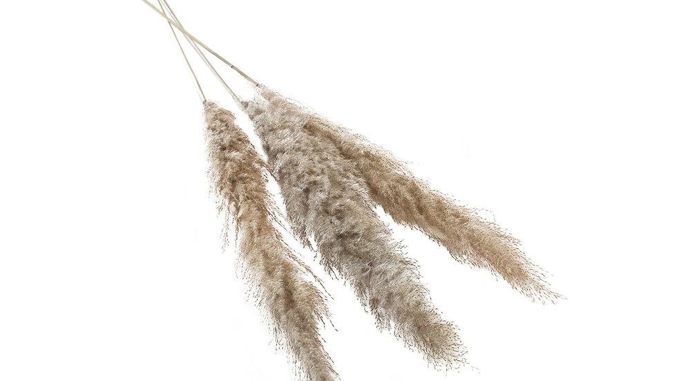 """47""""-53"""" Dried Pampas Grass"""