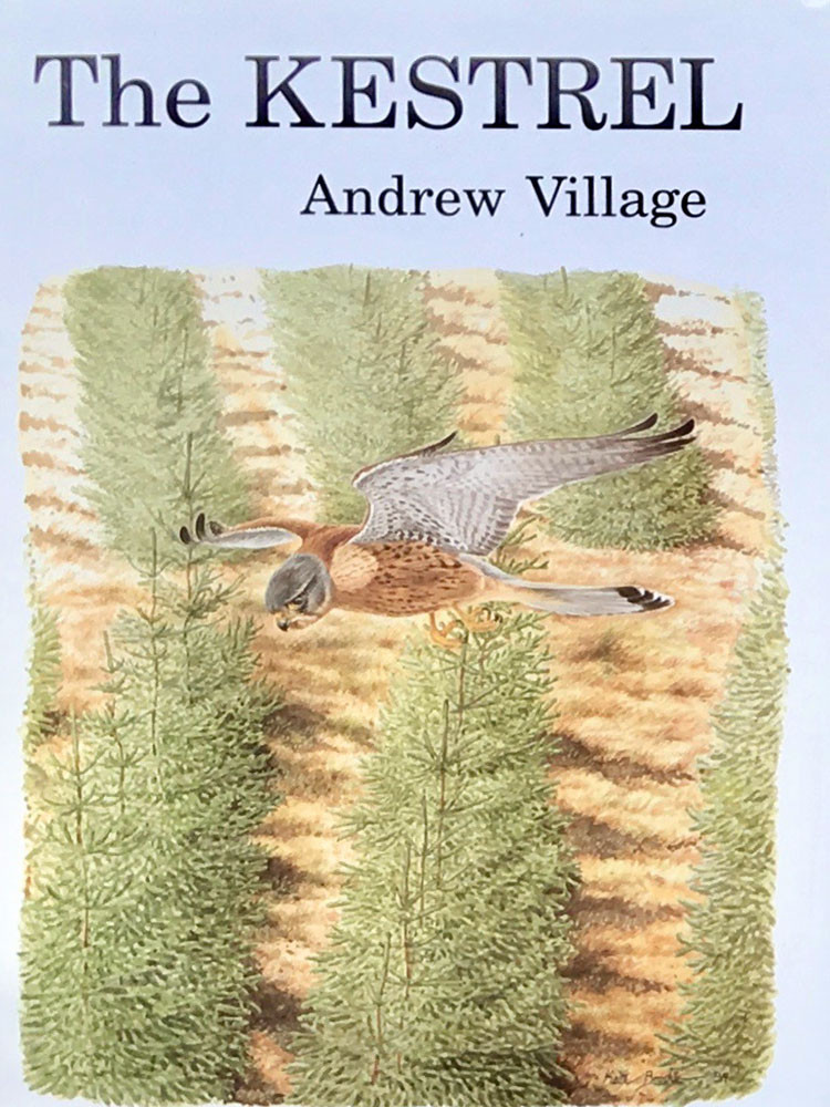 The Kestrel, A.Village 1980