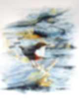 KB Dipper on Ice.jpg