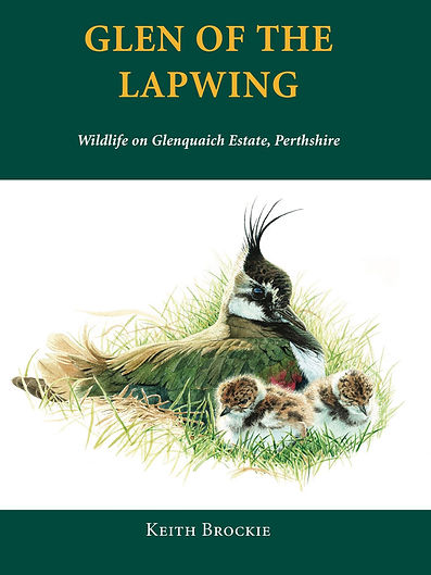 Glen of the Lapwing