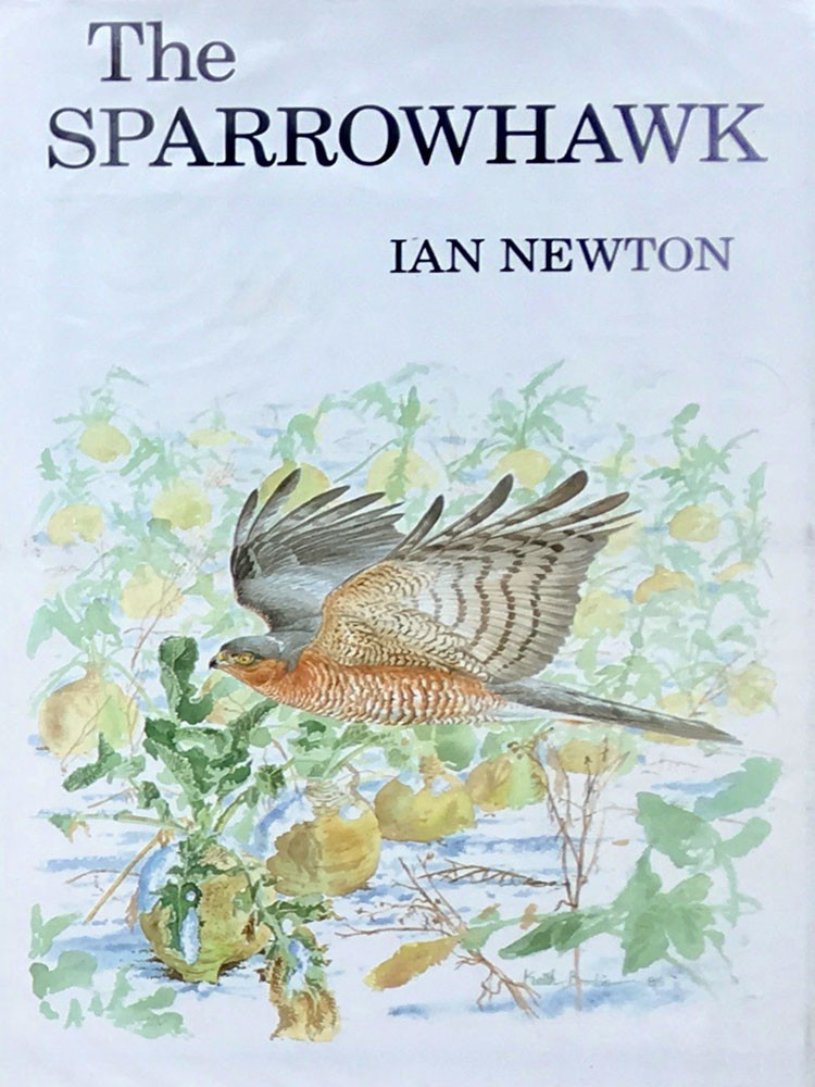 The Sparrowhawk, I.Newton 1986