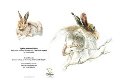 Spring mountain hare
