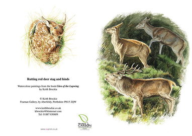 Rutting red deer stag and hinds