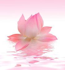 цветок3.jpg