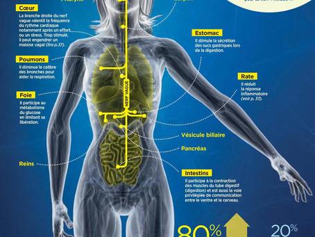 Le nerf vague : un réseau de bien-être, d'auto-réparation et de créativité haut débit - anti-stress