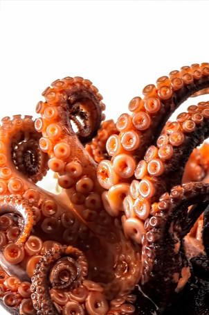 Octpuss