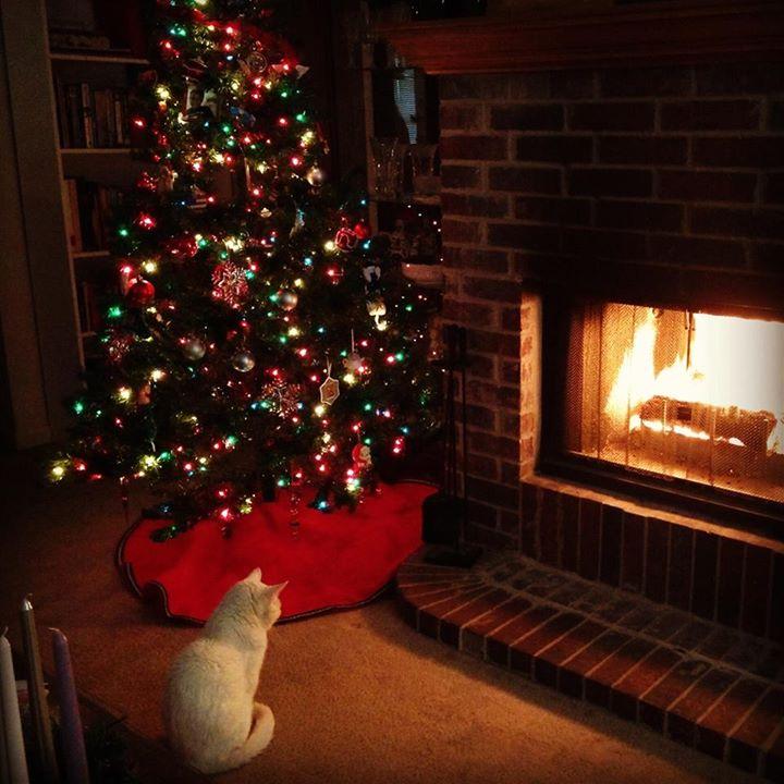 Inky's Christmas, 2013