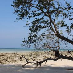 Bharatpur beach (4).jpg