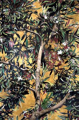 """Ayline Olukman, """" Blooming Tree """""""