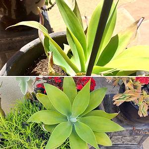 Nancy Zwiers Transitions Garden.jpg