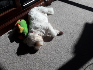 Barnaby Blog Dog