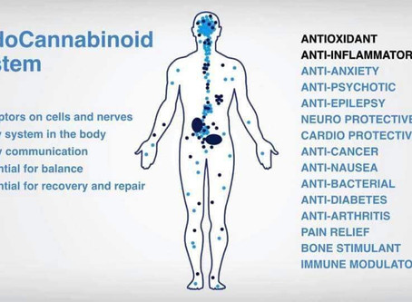 To Balance & Heal with CBD oil