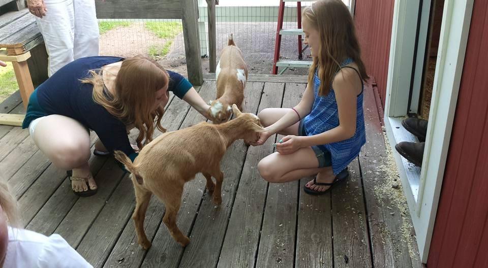 Meet the goats!