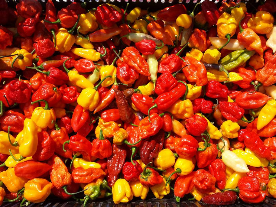 Caliente peppers