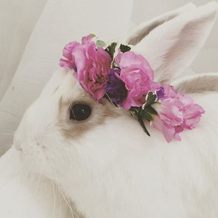 ...because bunnies & fresh flower bunny