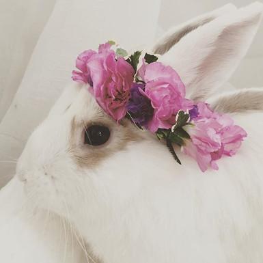 ...because bunnies & fresh flower bunny