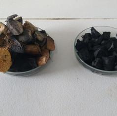 Produção de Carvão a partir da casca do coco verde