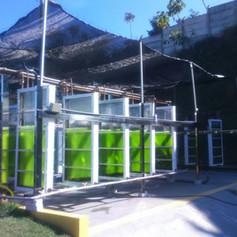 Serviço - Unidade Balga de Produção de Biomassa