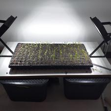 Desenvolvimento de Fertilizantes Orgânicos