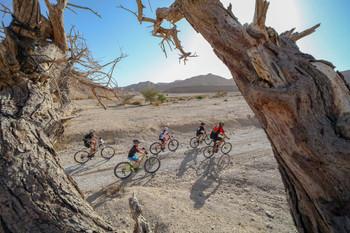 מרוץ אופני שטח סובב ערבה