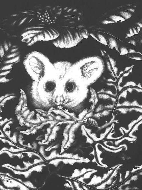 Possum (only 12 prints left)