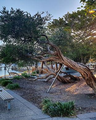 Bent tree.jpg
