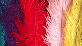 Coloured Ostrich Feather