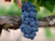 Solar Fortun winery in Baja1.JPG