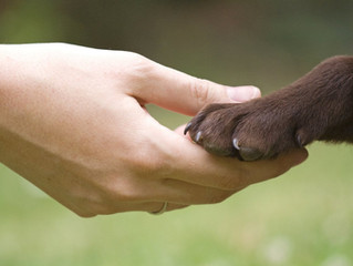 Declaración universal de los derechos del animal de compañía y de sus propietarios