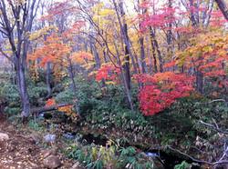 autumn in Niseko