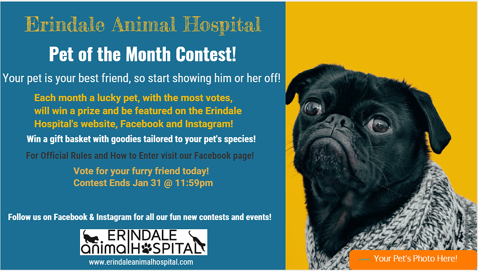 Erindale Animal Hospital - Pet of the Mo