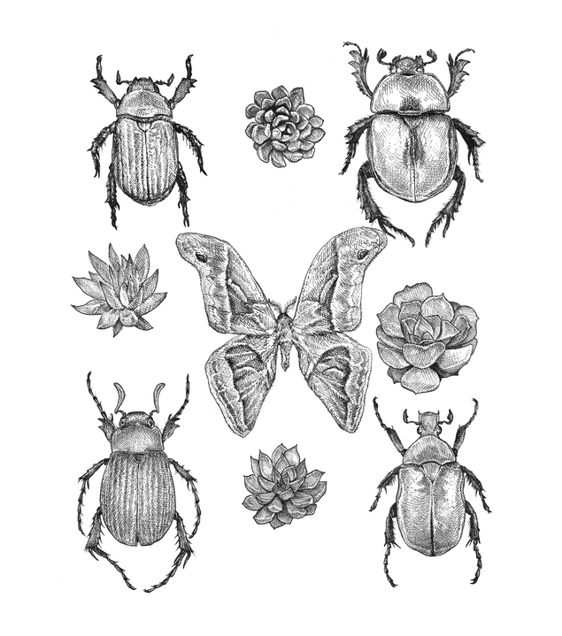 Scarabs and succulents