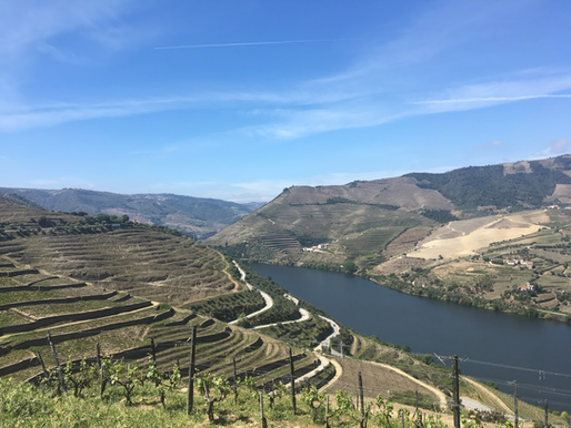 3 Things to Consider When Planning a Wine Trip